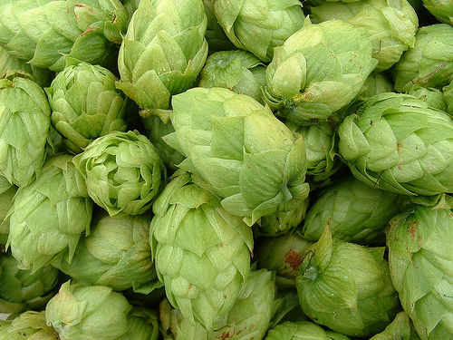 growing-hops.jpg
