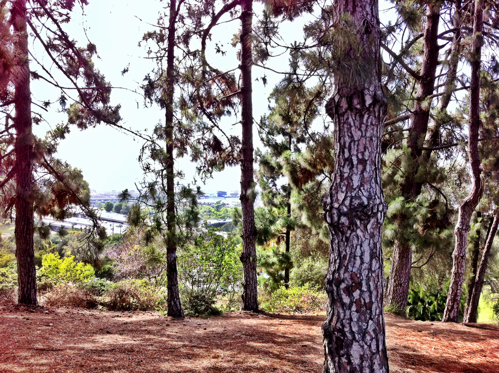 Trees above the Presidio Park