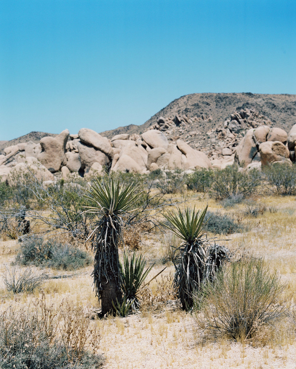 Palm Springs Joshua Tree Travel Film - Diana Ascarrunz Photography-58.jpg
