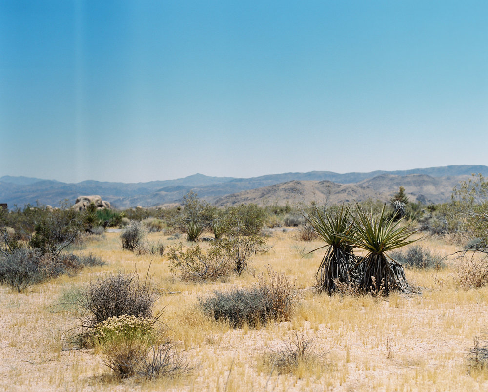 Palm Springs Joshua Tree Travel Film - Diana Ascarrunz Photography-63.jpg