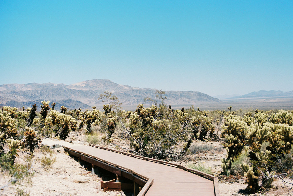 Palm Springs Joshua Tree Travel Film - Diana Ascarrunz Photography-49.jpg
