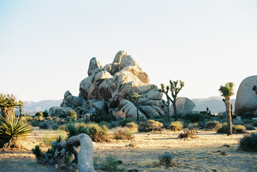 Palm Springs Joshua Tree Travel Film - Diana Ascarrunz Photography-50.jpg