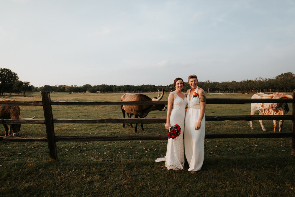 Texas brides in front of field of longhorns at Ranch Austin wedding
