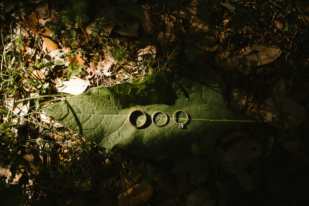 Wedding rings on a leaf in a forest