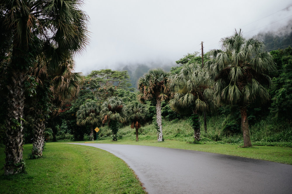 Misty roads and trees in Hawaii