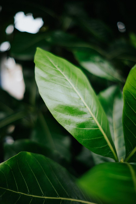 Plants in Hawaii