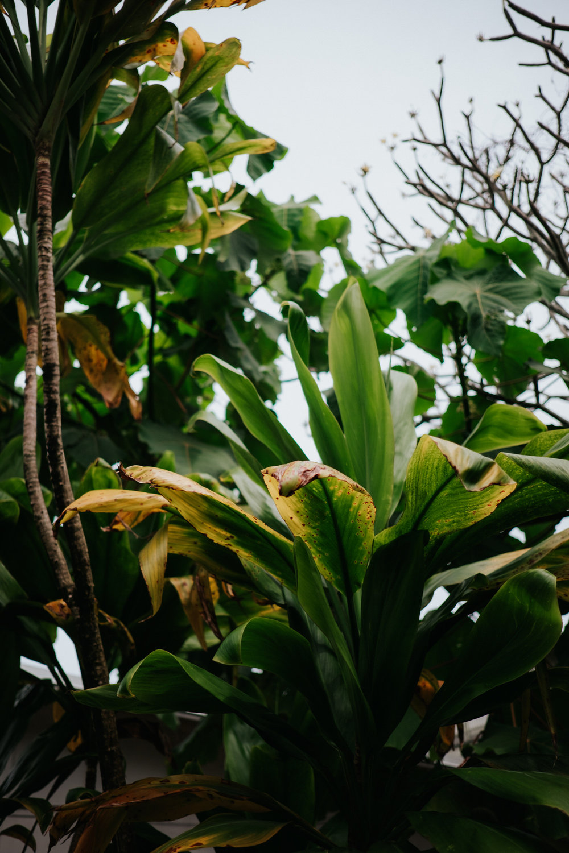 Hawaii plant photography