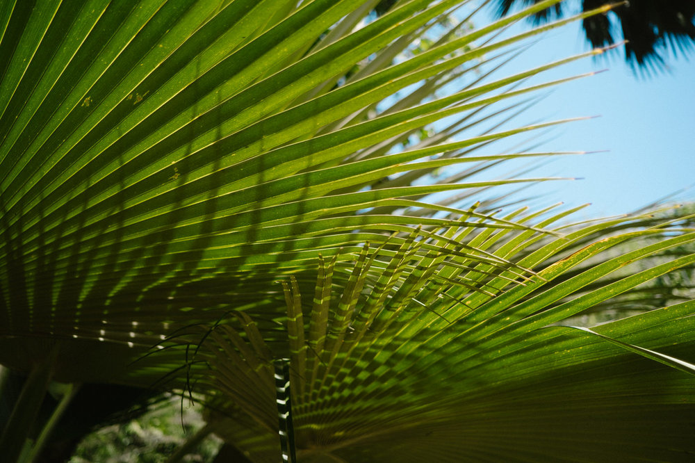 Hawaii nature photography / close up of plants