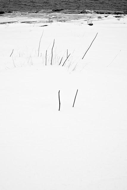 WhiteOut93A1032.jpg
