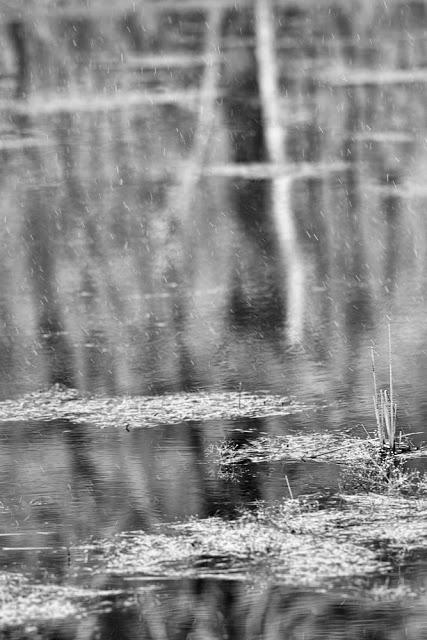 """April 5, 2008:Canon 1D mark ii + Canon 300mm f2.8L IS @ f2.8 Average Temperature 45 ℉, .1"""" mixed Precipitation"""