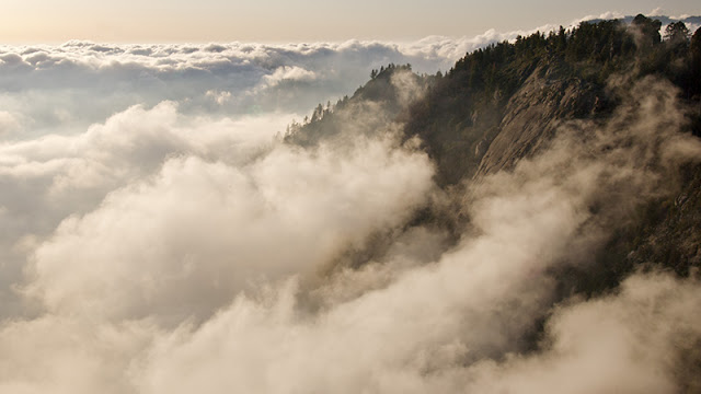 SequoiaNP1001.jpg