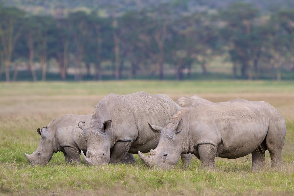 Rhino-_MG_3301.jpg