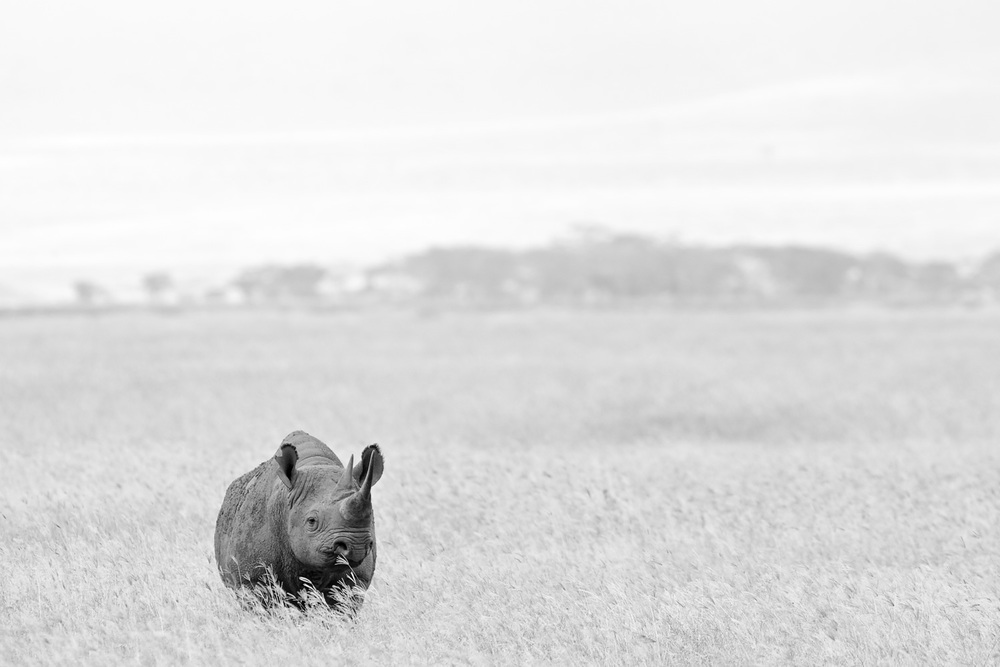 BlackRhino_B&W0092.jpg