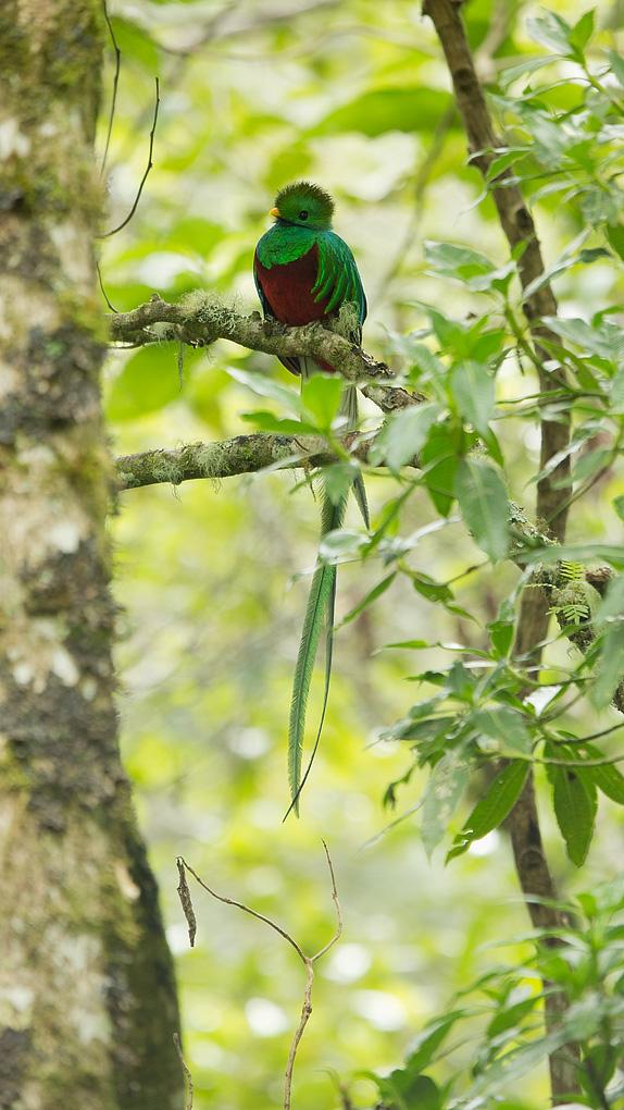 Quetzal7-19-13.jpg