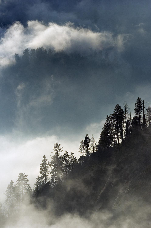 SequoiaNP0718.jpg