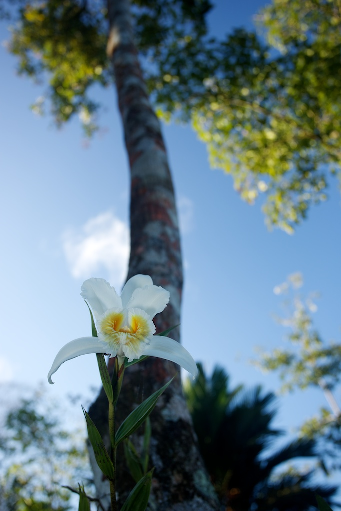 Ephemeral Orchid - Finca La Anita, Costa Rica ©2000-2014 BTLeventhal.com / Bruce & Tamy Leventhal. All rights reserved.