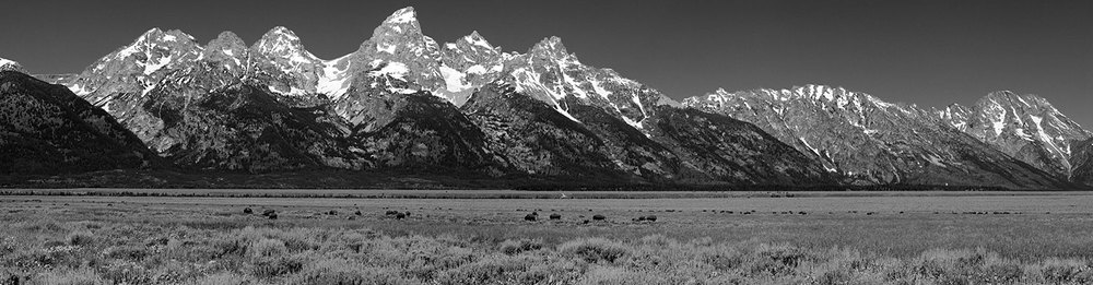 Bison and the Grand Tetons - 7 image Stitched Panorama   Canon 5D mark II and Canon 100mm f2.8 USM Macro