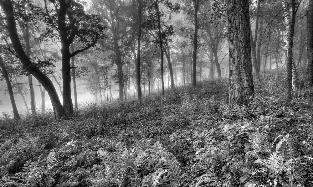 FoggyForest_MG_0638tm.jpg