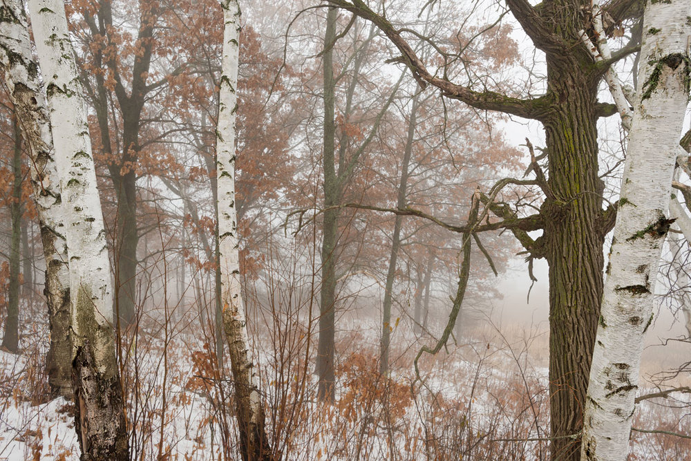 Foggy Morning in Autumn - William Obrien State Park, MN  Nikon D800E + Nikkor AFS 17-35mm f2.8