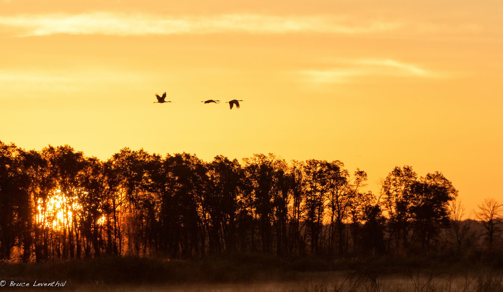 Sunrise Migrants - Crex Meadows Management Area, October 2014 Nikon D300 + Nikon 200-400mm f4.0 AFS