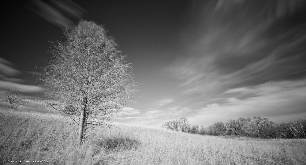 4/10/16 - Savana Grassland