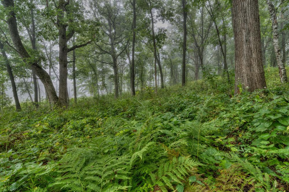 Forest Fog, Minnesota Nikon D810 + Nikon 18-35mm f/3.5G