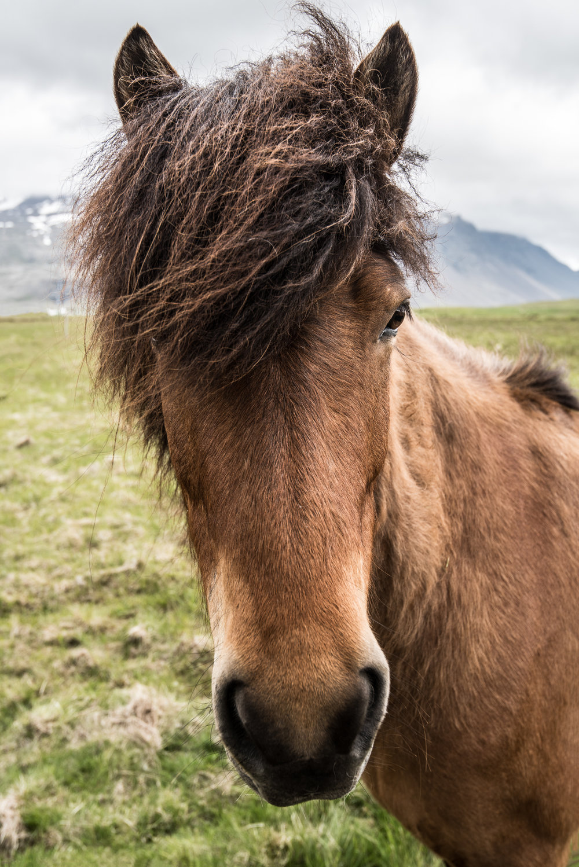 WO-Horse_BTL9479-Edit.jpg