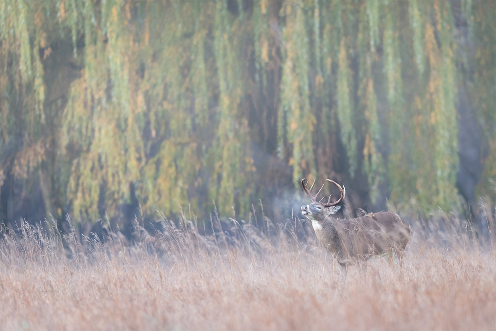 DeerFortSnelling_BTL0454-Edit.jpg
