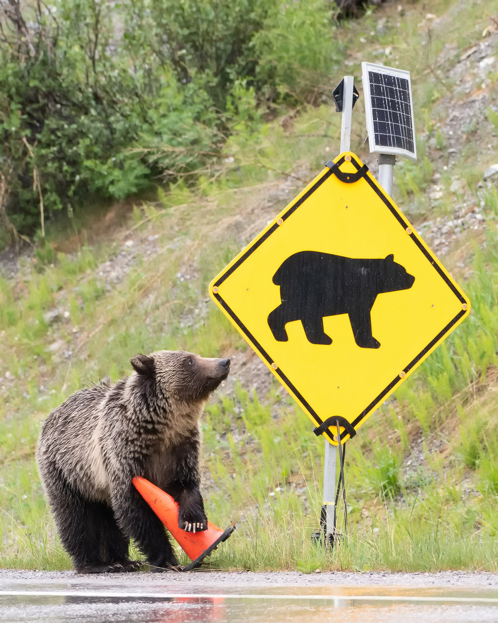 GrizzlySign_TLL7033.jpg