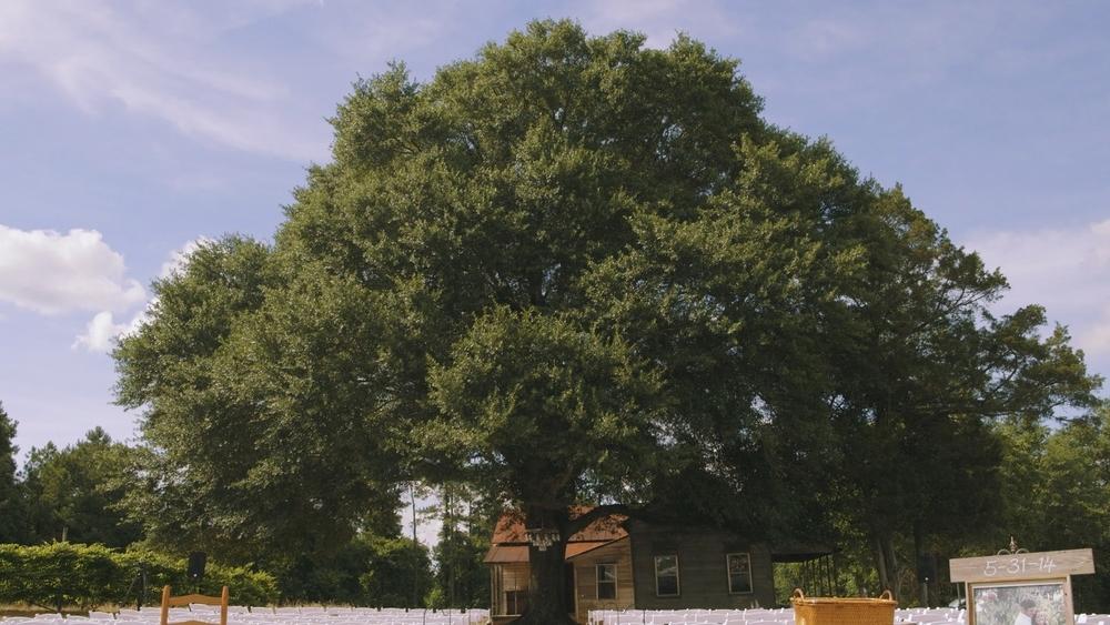 oak tree wedding.jpg