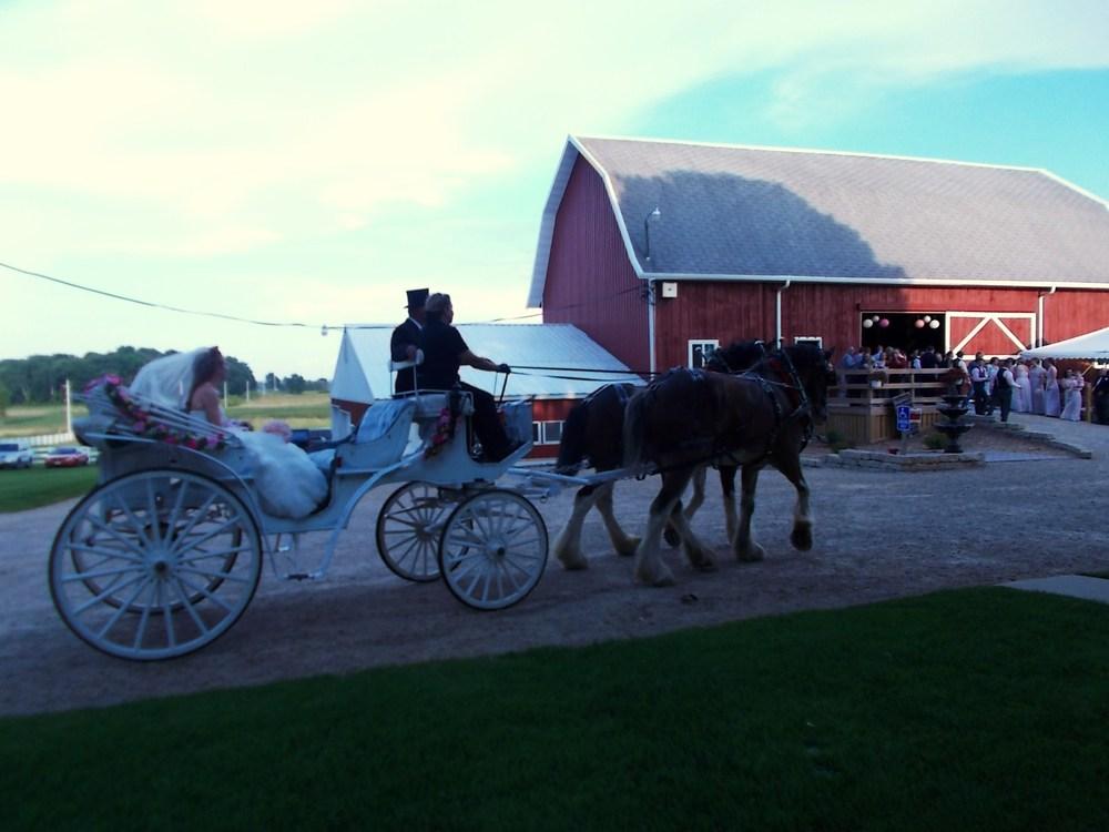 bride & Horse 2.jpg