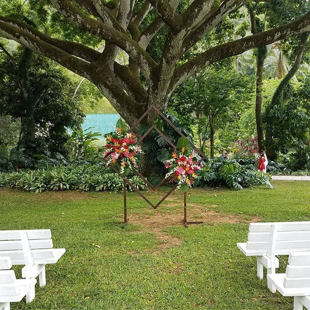 The flowering Monkey Pod Tree attracts birds, butterflies, and weddings! @why_knott_florist put together this vibrant floral arrangement at @happylittlecarla wedding. We have a beautiful arch that you can rent when hosting at @waimeavalleyoahu Direct message us for pricing details. #waimeavalleyoahu #whyknottflorist #anthuriums #peacocks #the #best #hawaiianweddings