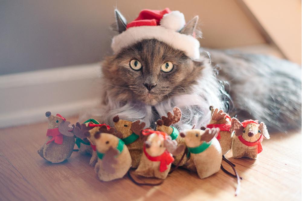 Santa Cat Christmas Card Reindeer Mice