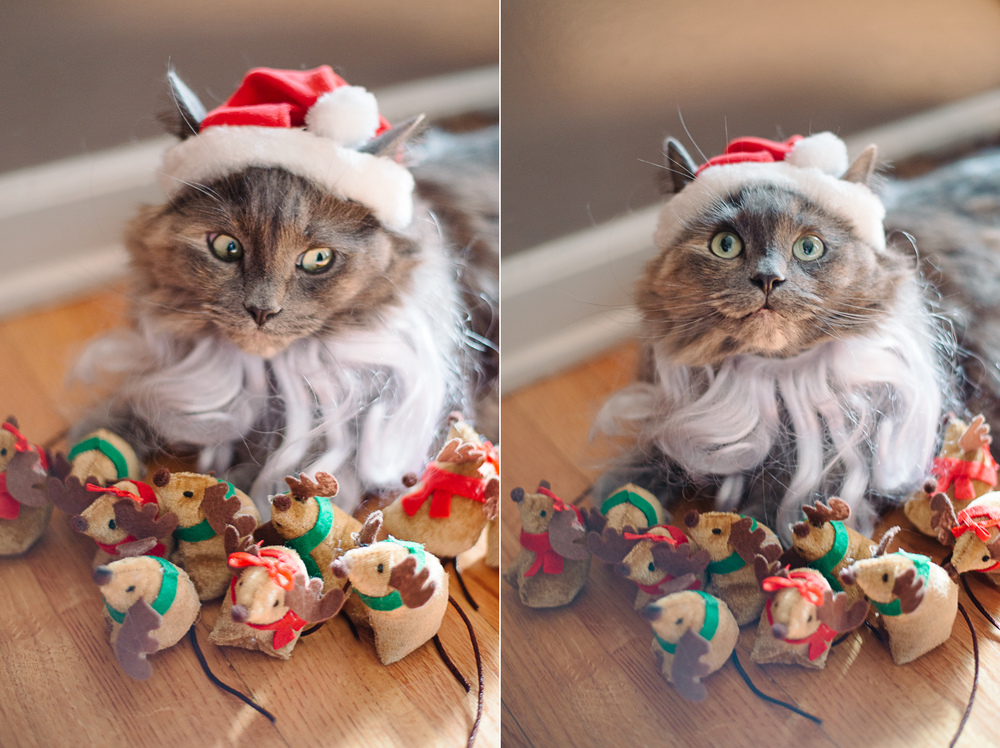 Santa Cat Christmas Card Reindeer Mice 2