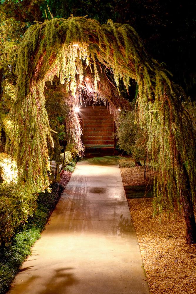 larix and northeast walkway night.jpg