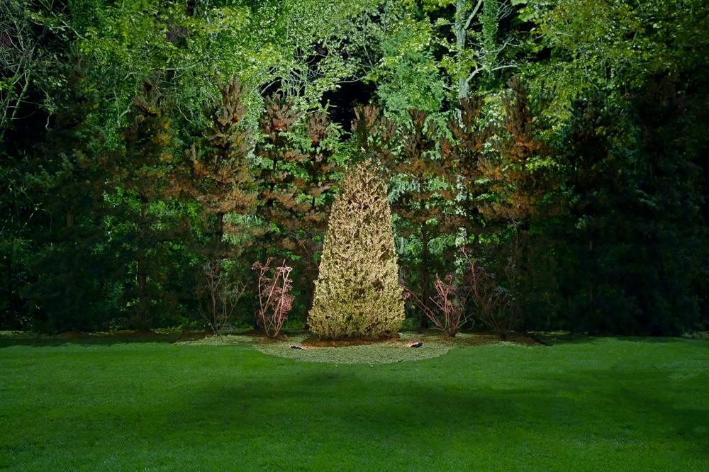 boxwood obelisk.jpg