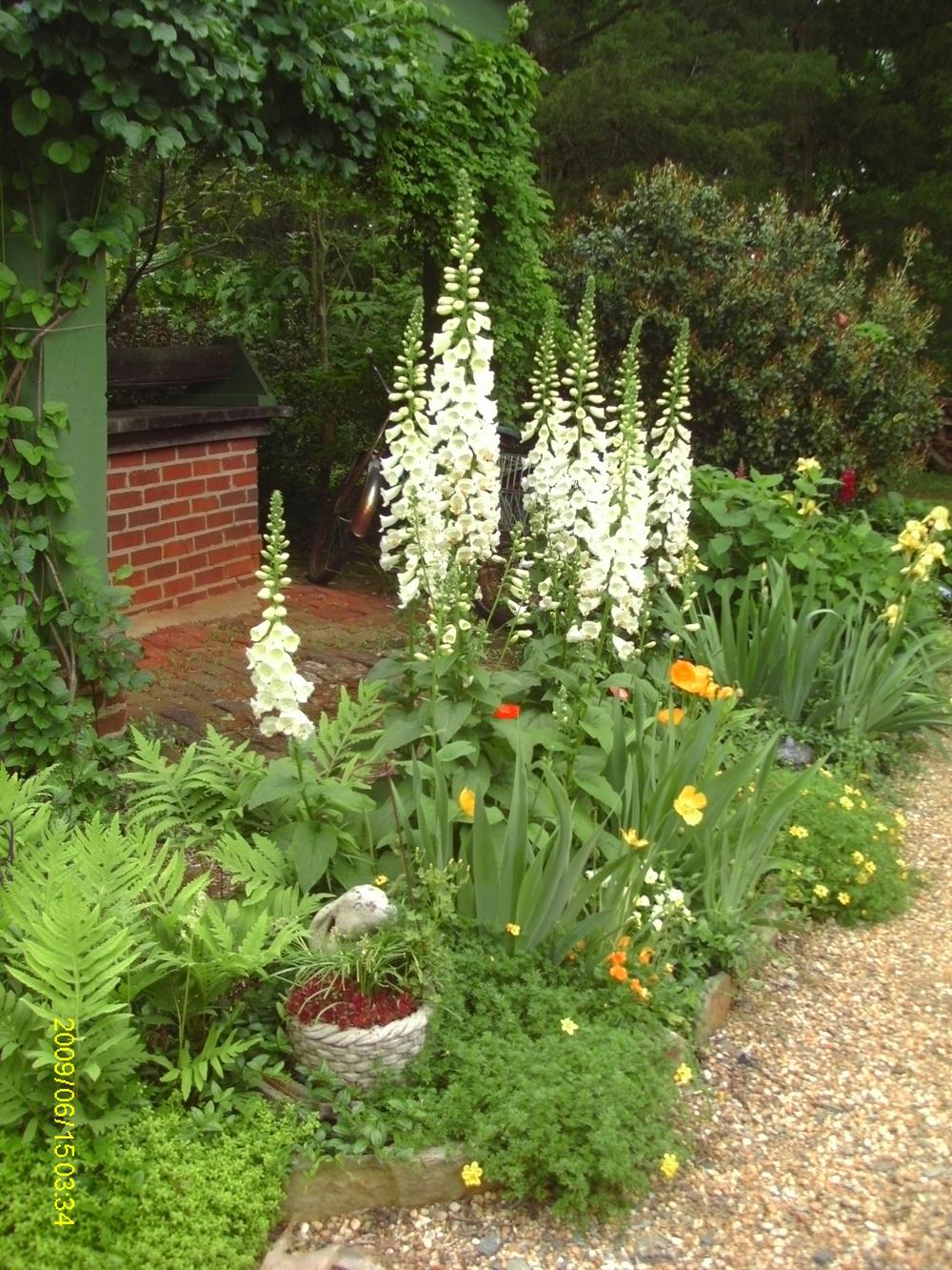 oakton garden 001.JPG