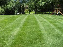 Lawn Maintenance?