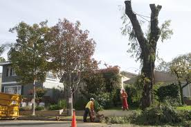 Tree Removal?