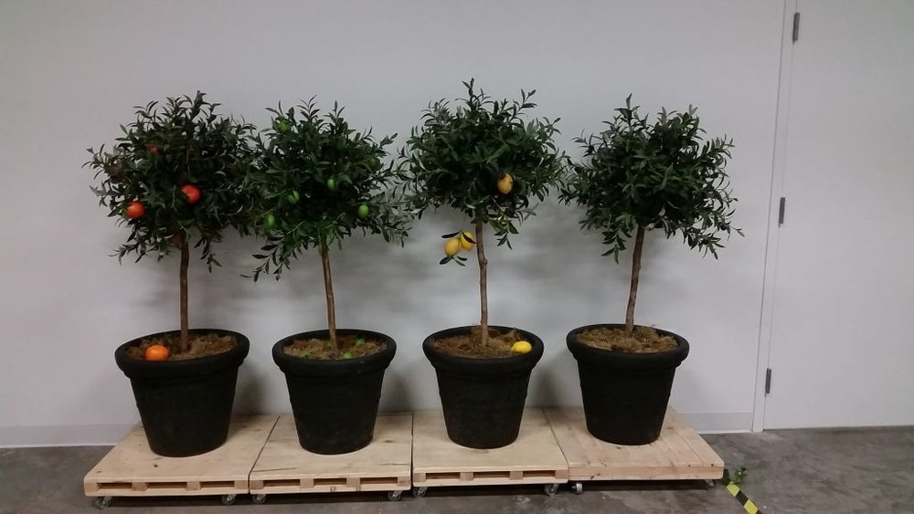 Much Ado About Nothing : Fruit Trees (in progress), Utah Shakespeare Festival, 2016  I reconstructed these trees. Because the trees were moved around a lot, each piece of fruit was individually sewn on.