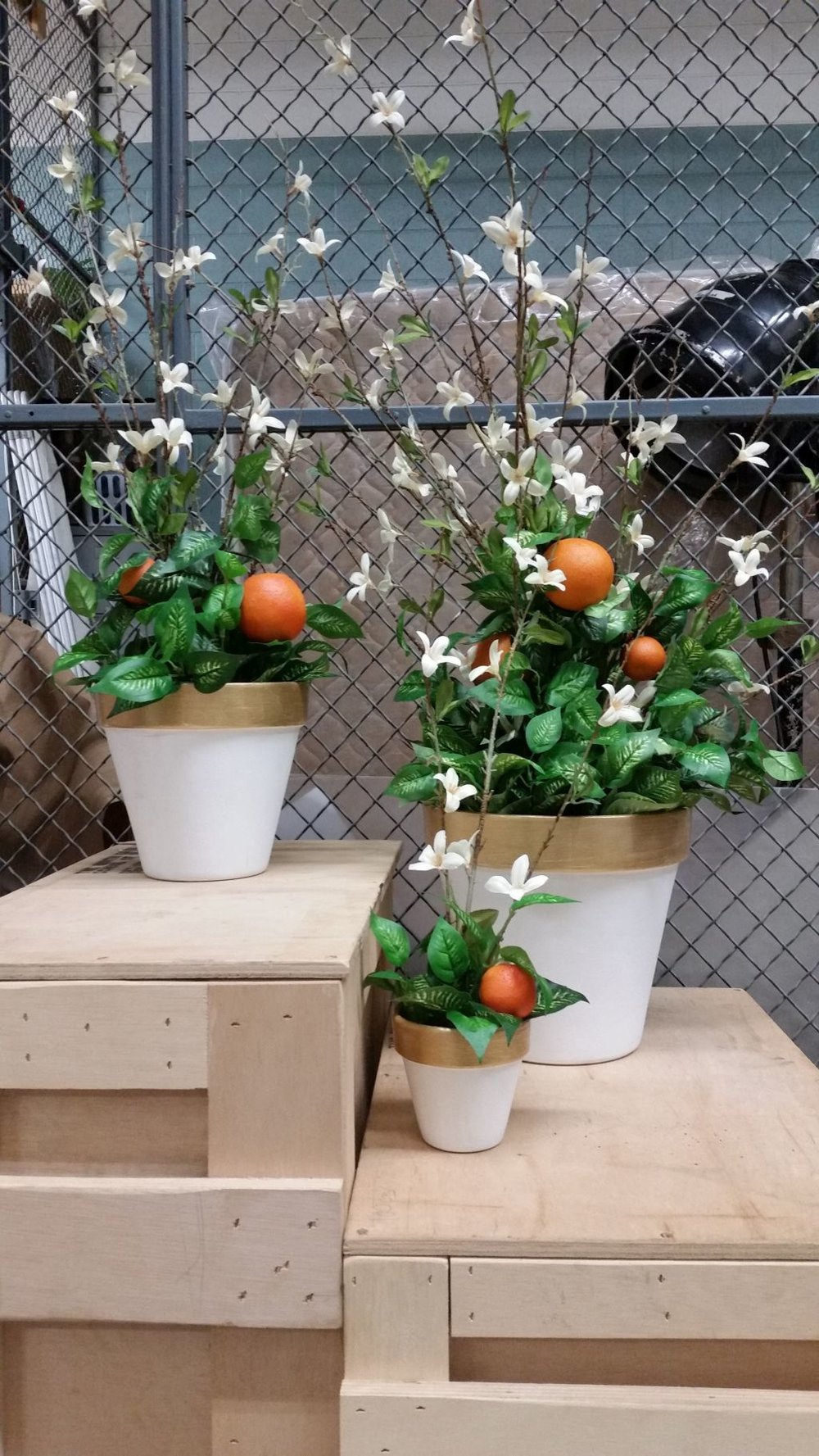 The Italian Straw Hat:  3 floral arrangements with oranges, UNCSA, 2016