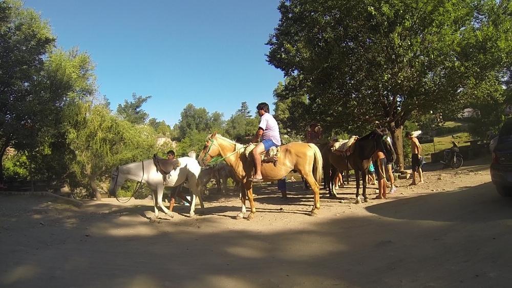horses.MP4.Still001 (1024x576).jpg