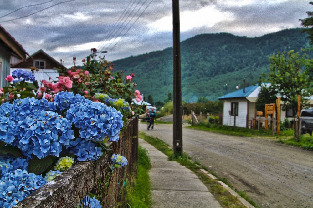 puya - flowers I (1280x852).jpg