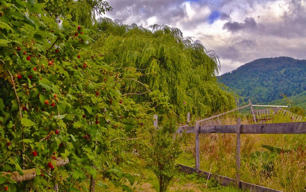 puya vines (1280x802).jpg