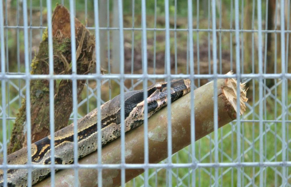 Snake4 (1024x658).jpg