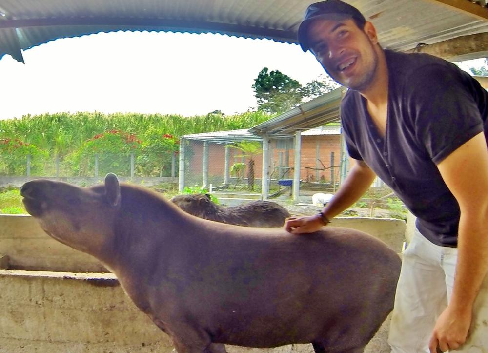 Tapir and el Tiburón