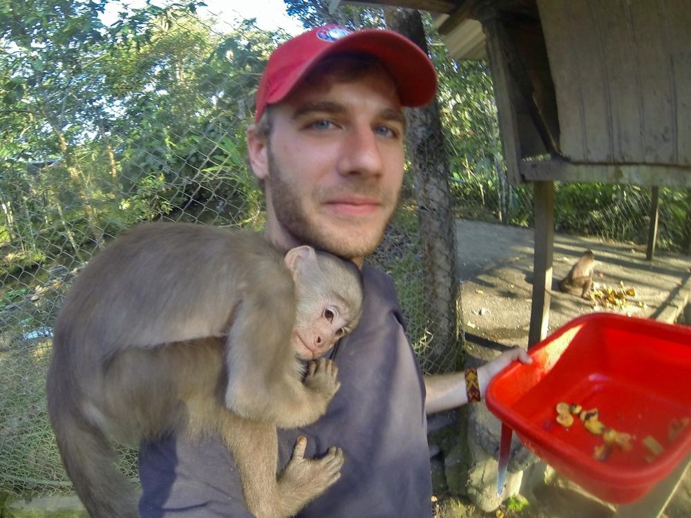 Capuchin Monkey bro