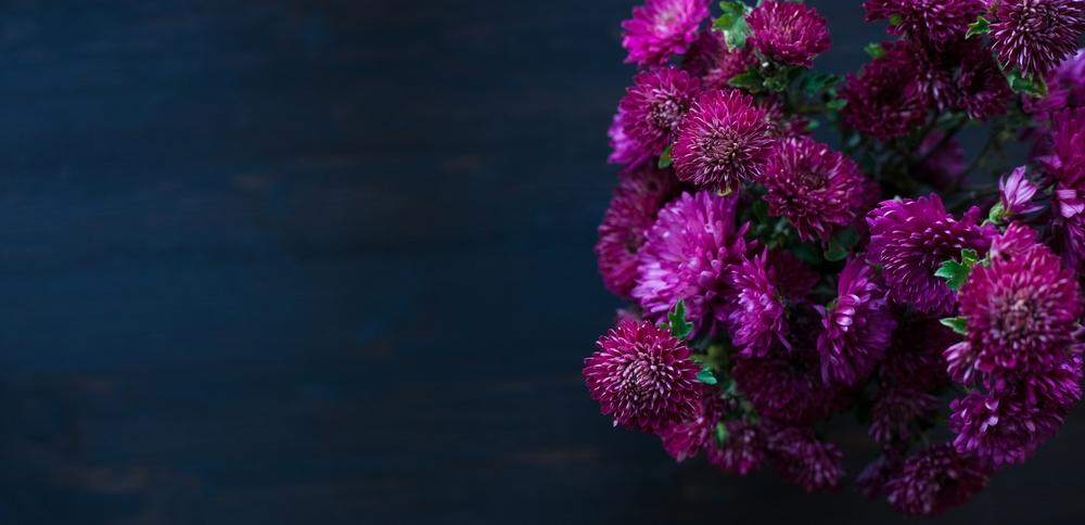 stock-photo-dahlia-autumn-flower-design-with-copy-space-233203543.jpg