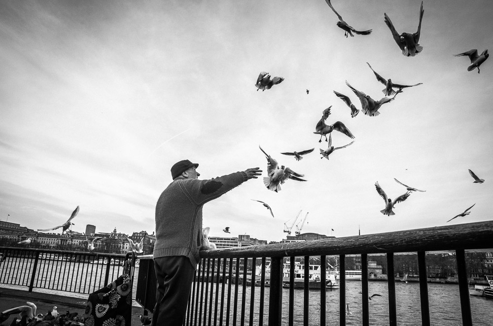 London|Southbank birds|4206|January 26, 2013.jpg