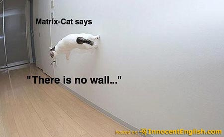 cute-cat-doing-walking-on walls